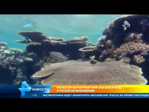 Great Barrier Reef Rapidly Disappearing
