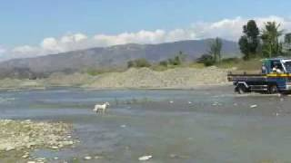 San Jose (Nueva Ecija) Philippines  city photos : San Jose, Nueva Ecija, Dog crossing Talavera river, Philippines