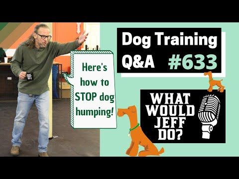 Dog Training - Soft Dogs - Stop Dog Humping - What Would Jeff Do? Q&A  Ep.633 (2019)