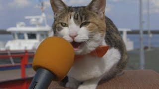 au WALLET Market PR動画「猫島で、猫100匹に聞きました! –Cat island 」