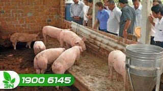 Nông nghiệp | Nuôi lợn an toàn sinh học: Vừa làm giàu lại phòng dịch bệnh