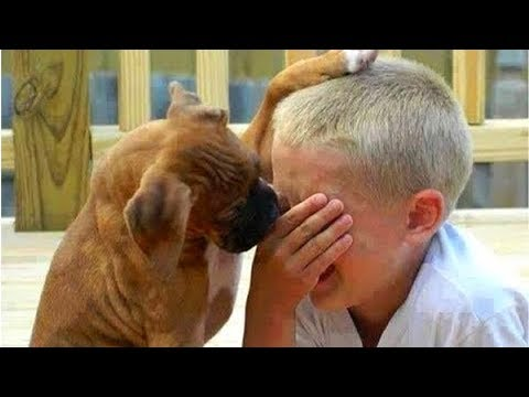 Funny cat videos - Dogs  and cats  & owners  are the best friends  Funny Cat and Dog compilation