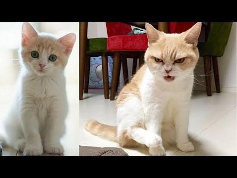 Funny cat videos - Funny Cat and Cute Kittens Videos Compilation #6