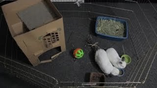 How Much Room Does a Rabbit Need? : Rabbit Care
