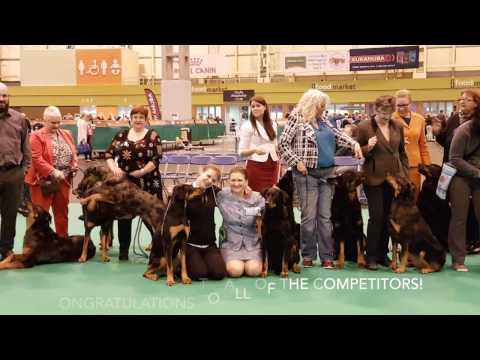 Beauceron Judging - Crufts 2017