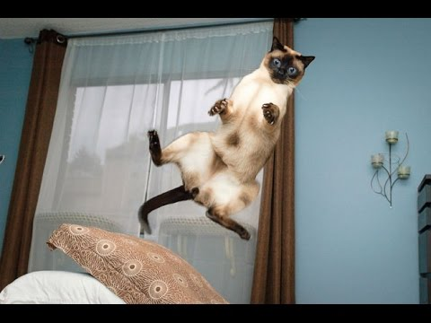 [HILARIOUS!!] Cat Jump Fails