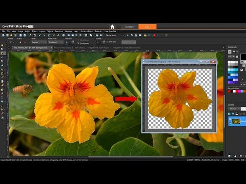 How to Use the Magic Wand Selection Tool in PaintShop Pro
