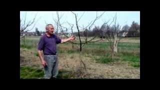Orezivanje voća,obrezivanje voćaka,  stare sorte jabuka, stare sorte voća,Mirko Veić