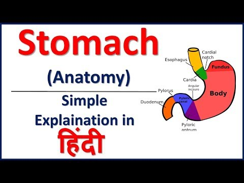 Anatomy of Stomach in Hindi | Bhushan Science