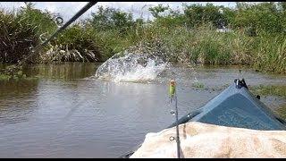 Pesca Com Caiaque - Traíra Gigante