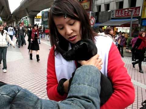 志工可愛牙套妹抱小黑狗