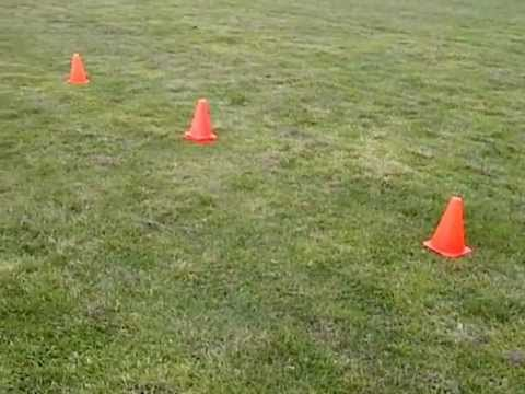 illinois agility test set up
