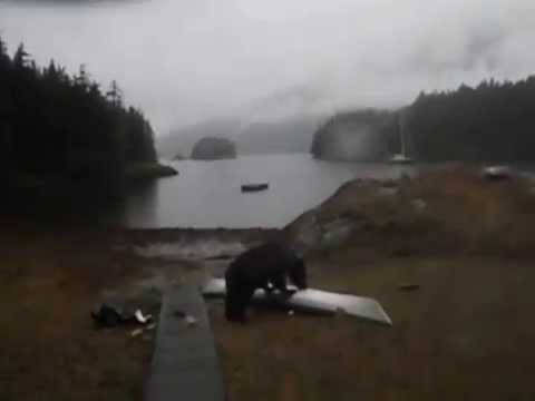 Bear Does NOT Care About Your Kayak.