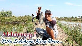 Video Detik2 Terangkatnya Ikan Besar Penghuni Rawa Soge .!! MP3, 3GP, MP4, WEBM, AVI, FLV Januari 2019