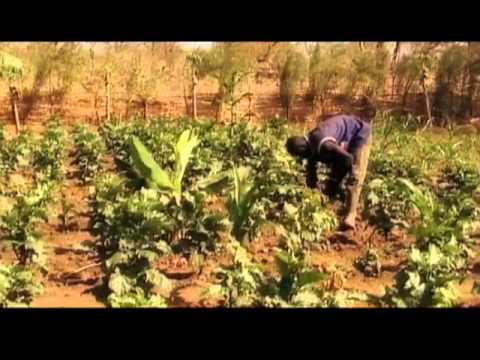 Vidéo Youtube - Agricultural finance at the heart of rural development