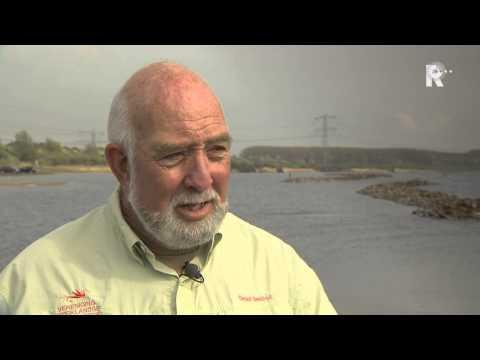 Oostvoornsemeer - In het Oostvoornse Meer worden donderdag door Sportvisserij Zuid-West Nederland 1500 jonge zalmpjes uitgezet. Het is voor het eerst dat zalm wordt uitgezet i...