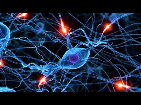 Создание новых нейронных связей - DomaVideo.Ru