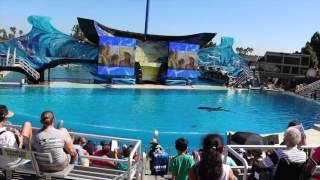 SeaWorld Orca Floats Motionless in a Tank (TIMELAPSE)