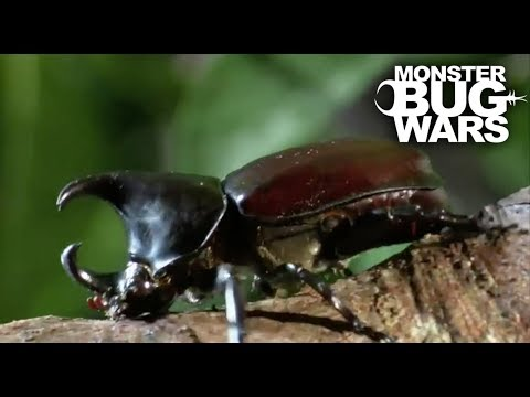 Brutal Beetle Battles | MONSTER BUG WARS