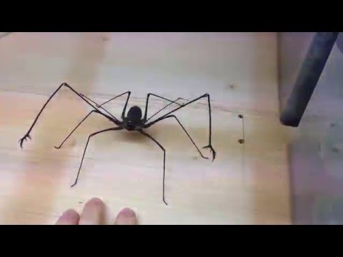Watch: Spider Attack, or Spider Abuse?