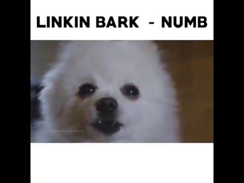 Linkin Bark – Numb
