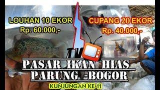 Download Video Pasar ikan hias parung -Bogor kunjungan ke 11 # Cupang MP3 3GP MP4