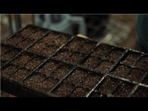 Video Gardening Basics : How to Plant Seeds for a Home Herb Garden download in MP3, 3GP, MP4, WEBM, AVI, FLV January 2017