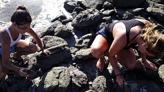 Ep.158 Picking Oysters at Grenville