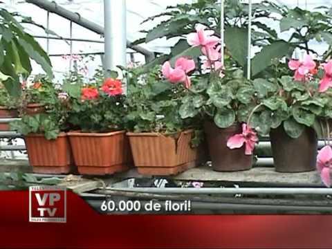 60.000 de flori!