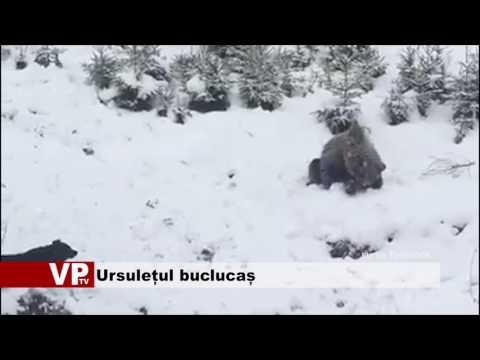 Ursulețul buclucaș
