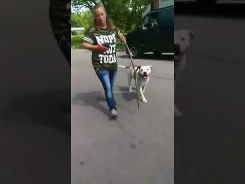 Pit bull Protects Owner