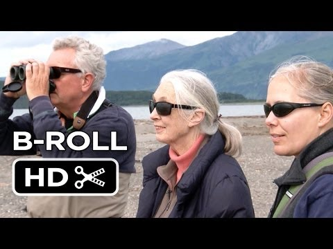 Bears B-Roll 'Jane Goodall'