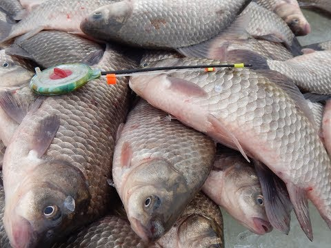 Весенняя рыбалка в алтайском крае