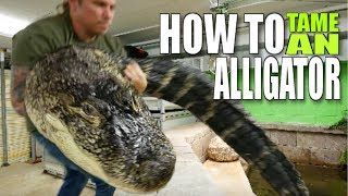 HOW TO TAME A HUGE ALLIGATOR!!! Brian Barczyk by Brian Barczyk