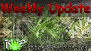 Weekly Update 1/19/2017 by  NVClosetMedGrower