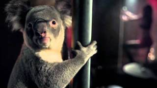 WIRES Koala Television Commercial