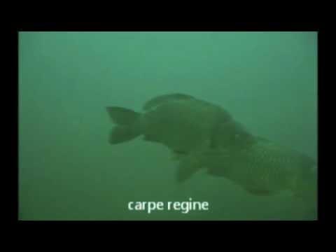 Nuotiamo insieme ai pesci del Ticino