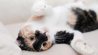 Los gatos son uno de los animales más adorables del mundo y, aunque muchos hombres y mujeres se debaten entre si adoptar un gatos, perros, pájaros, peces, tortugas, hamster u otros animalitos, estas son algunas de las razones que podrían ayudar a elegir un gato como mascota y nuevo miembro de la familia: son graciosos y divertidos, son muy inteligentes, exigen menos cuidados, se adaptan a otros animales, son muy limpios, contribuyen a la buena salud, evitan infartos, pueden querer a cualquier persona, se moldean a cualquier ambiente ya urbano o rural.Fondo musical: Disco Ball (Youtube Free audio library)Imágenes: pixabay.com (video) (12); videvo.net; pixabay.com (video); videvo.net; pixabay.com (video)***Videos recientes: https://tutovariedades.comListas de reproducción: https://listas.tutovariedades.comSuscríbete: https://sub.tutovariedades.comADVERTENCIA: Las imágenes podrían ser solamente ilustrativas y no corresponderse con la realidad. No se puede garantizar que la información consignada en este video sea verífida, y debe ser considerada como una obra literaria de caracter educativo y/o con fines de promoción.ACERCA DEL CANAL: tutovariedades es un canal especializado en videos de curiosidades, misterios, animales y, en síntesis, todo lo más extraño, raro, curioso e increíble del mundo. Desde temas de cultura como ciencia y tecnología o casos de superación y motivación que te harán pensar y reflexionar, hasta historias de miedo y horror que te pondrán los pelos de punta como ovnis, fantasmas y enigmas, pasando por hombres y mujeres sorprendentes, famosos de cine y televisión, records y tops.Todo un mundo de entretenimiento con la verdadera historia de hechos, lugares  y personas. Así que ¡qué esperas! Sólo suscríbete y siéntate a disfrutar del mejor contenido de variedades y lo mejor: en un solo sitio, con narración profesional estilo locutor e imágenes de alta calidad.
