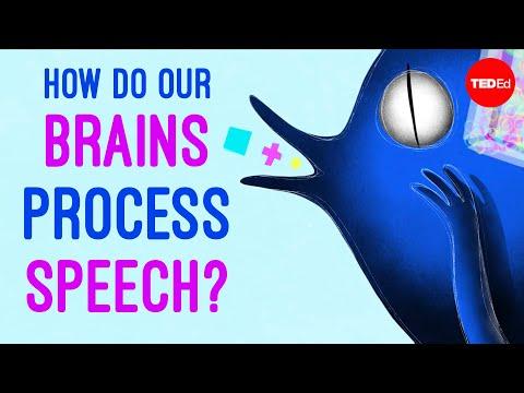 How do our brains process speech? - Gareth Gaskell