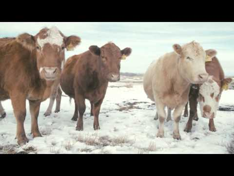 Managing feed costs in winter grazing systems
