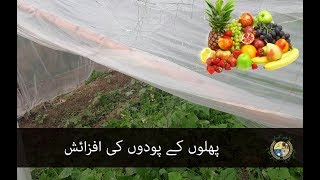 پھلوں کے پودوں کی افزائش - Growing of Fruits Plants - Phalo ke Poday Uganay ke Tarekay