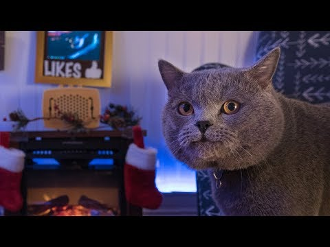 Interactive Cat Live Stream - Behind the Scenes (видео)