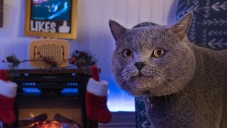 Video Interactive Cat Live Stream - Behind the Scenes MP3, 3GP, MP4, WEBM, AVI, FLV Maret 2018