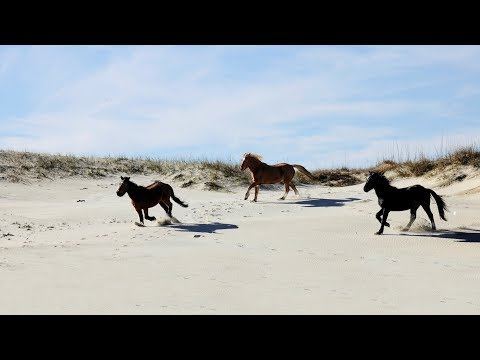 A ride with 'Wild Horse Adventure Tours' in the Outer Banks