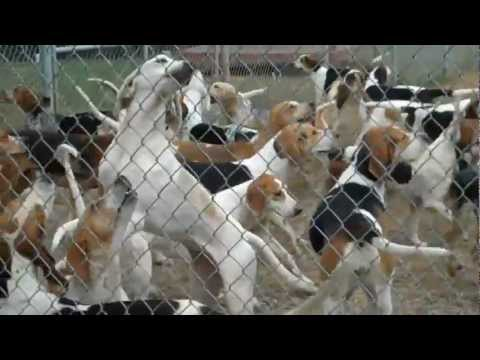 Foxhounds Sound Off