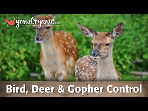 Bird, Deer, and Gopher Control