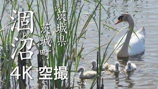 【絶景茨城/祝!ラムサール条約登録】涸沼[4K]茨城県茨城町|VISIT IBARAKI, JAPAN