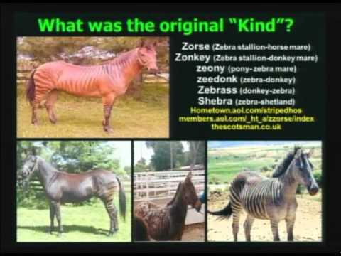Do Animals Evolve? Evolution Defined   Christian Apologetics Week 2