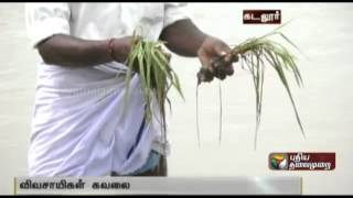 Crops in Cuddalore affected due to rains