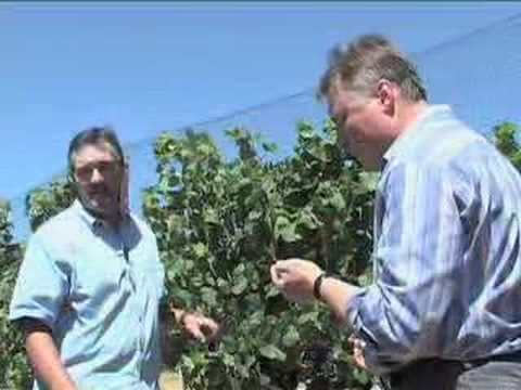 Preparing for Harvest - Sonoma County Winegrape